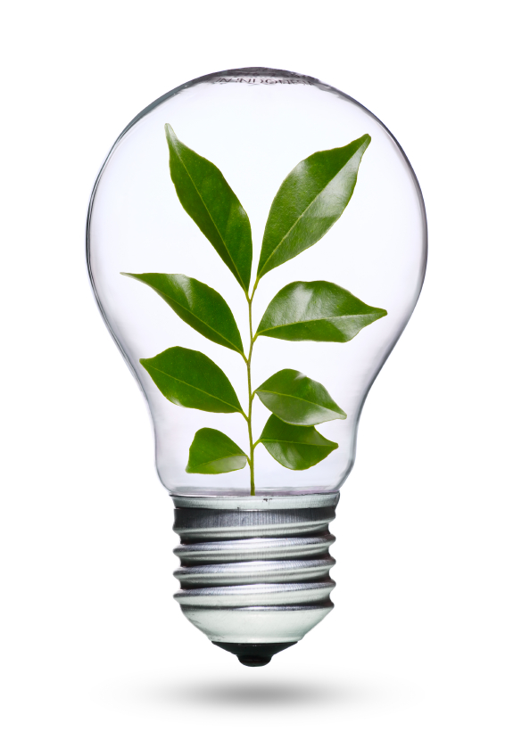 Light bulb with plant